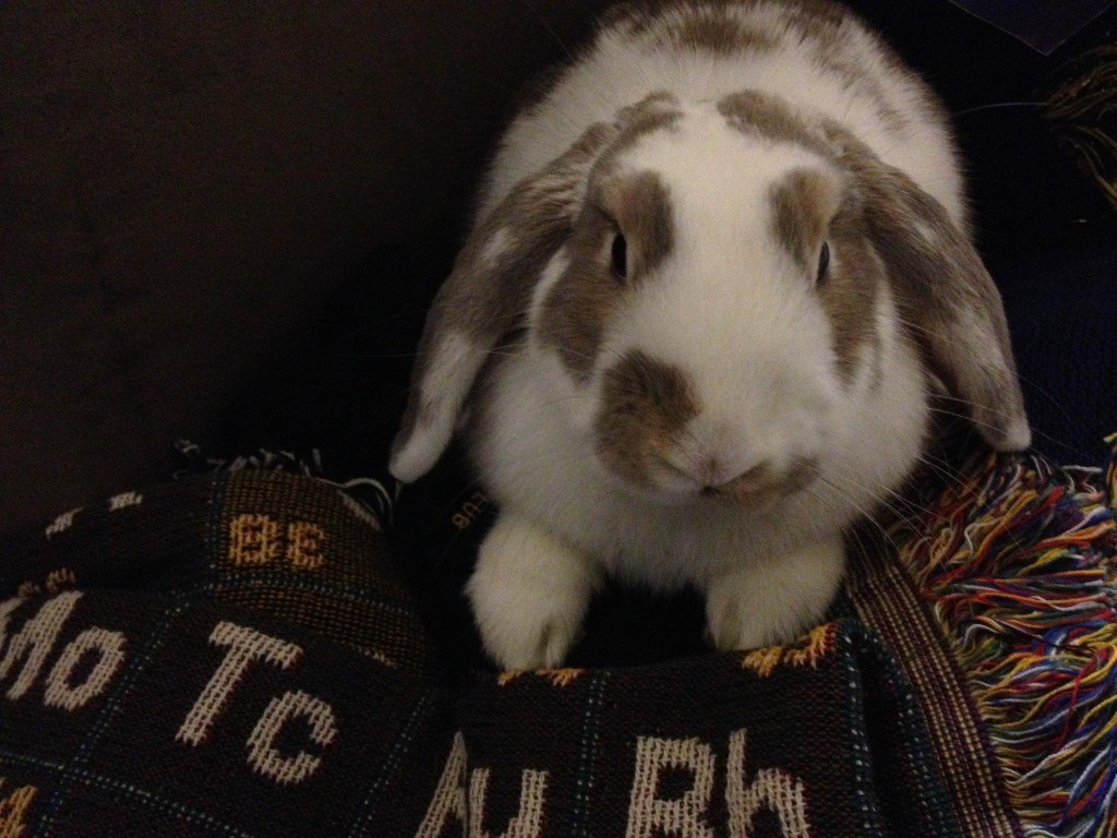 Sneakers the Chemistry Bunny